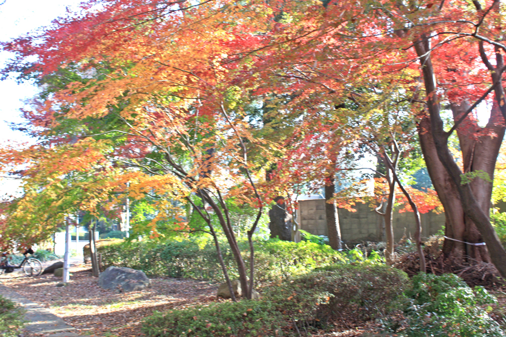 飯島和庭園の紅葉b.jpg
